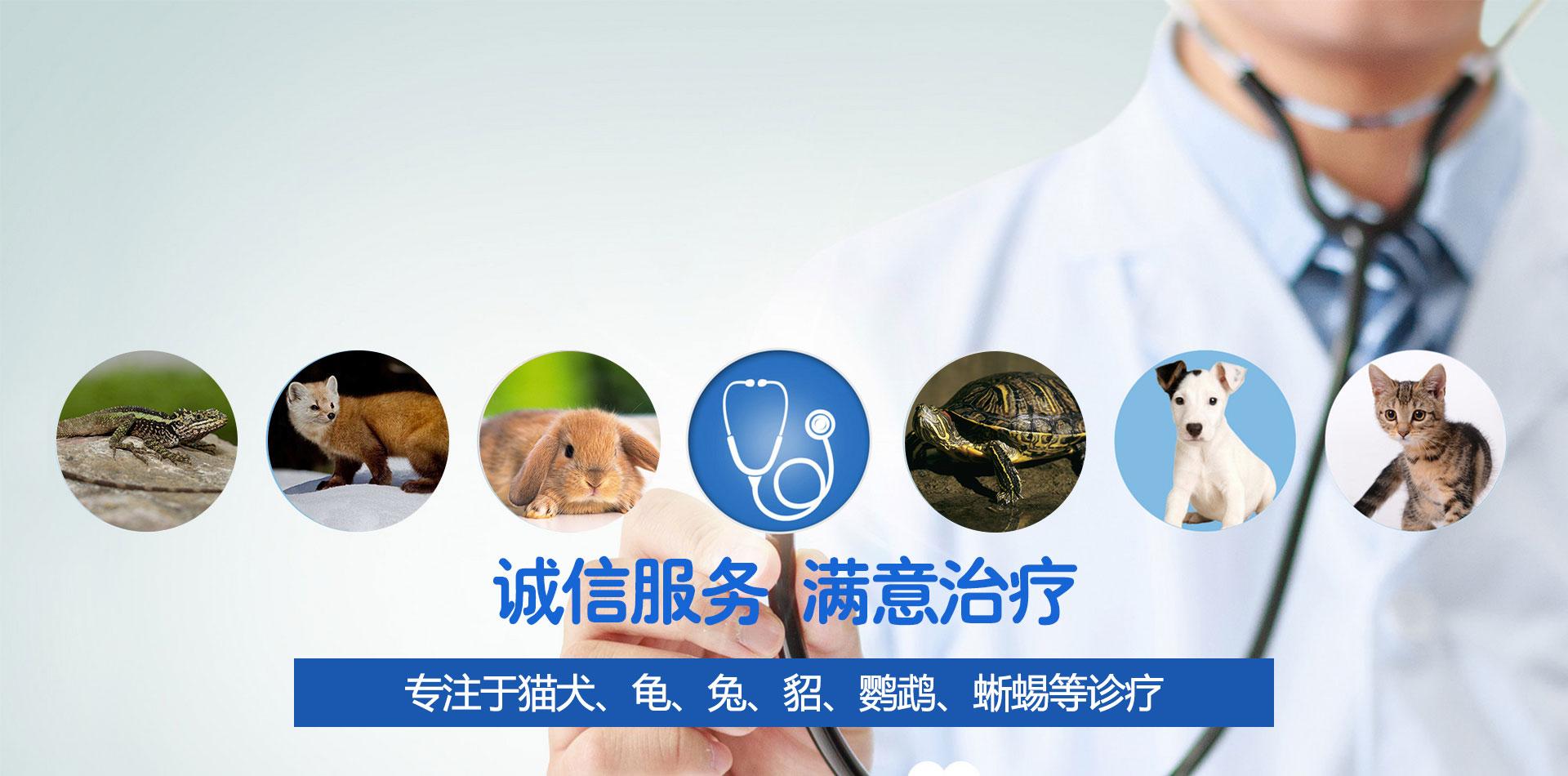 沈阳宠物医院