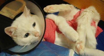 丹东犬猫手术