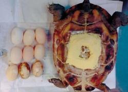 盘锦乌龟诊疗