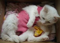 丹东犬猫心脏病