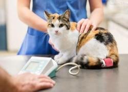 盘锦犬猫肾脏病