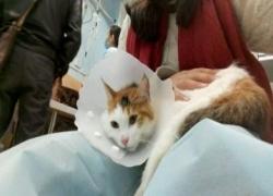 丹东犬猫结石手术