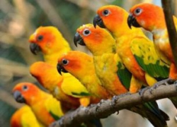 盘锦鹦鹉疾病